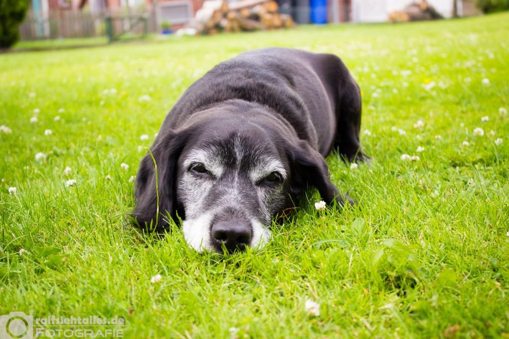 Schlafende_Hunde