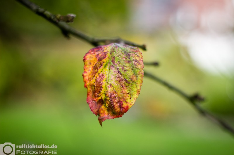 Herbstimpressionen (7 von 8)