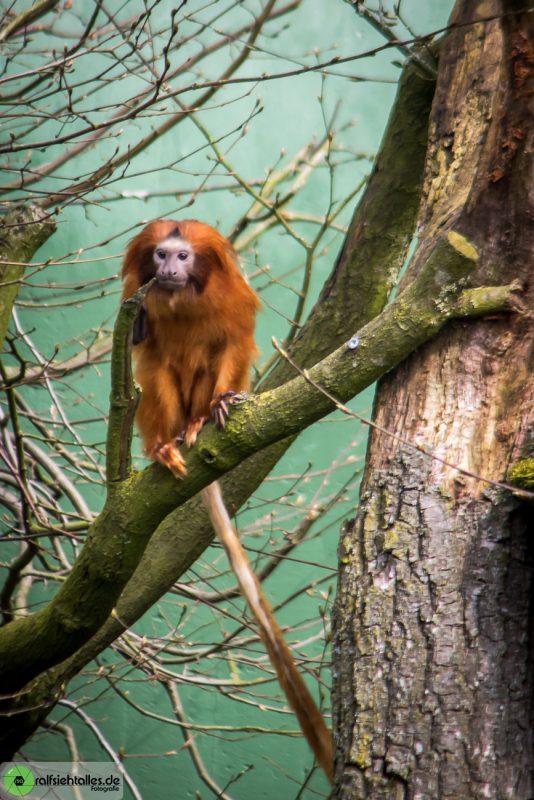 kleiner Affe auf dem Baum