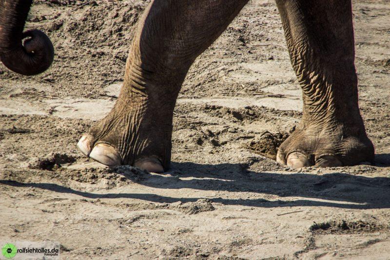 Elefantenfüsse