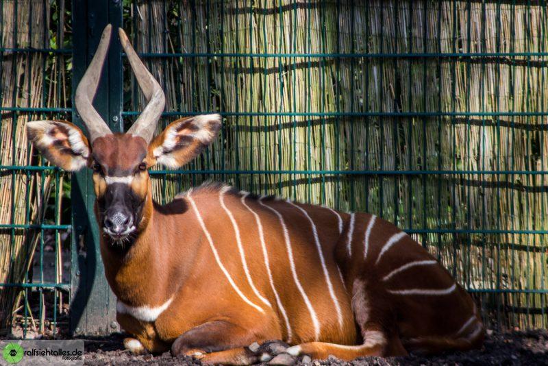 Tiere aus dem Allwetterzoo in Münster
