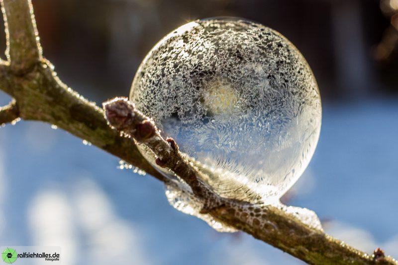 gefrorene Seifenblasen auf einem Ast, sind super um das Licht einzufangen